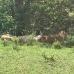 Freaking life changing Safari experience in Africa beyond masaimara safarihellip